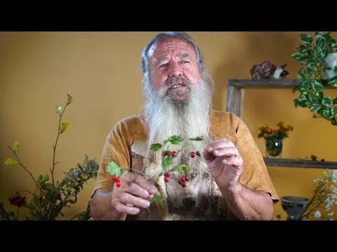 Weißdorn - Die Arzneipflanze des Jahres 2019