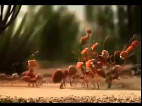 80 Gambar Animasi Semut Lucu Paling Keren