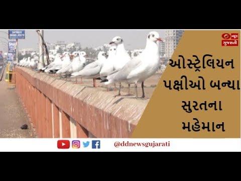 Australian Birds In Surat