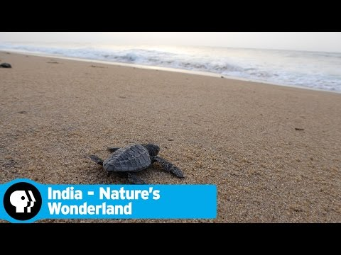 INDIA - NATURE'S WONDERLAND | Next on Episode 2 | PBS