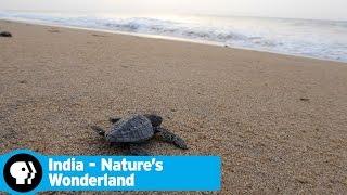 INDIA - NATURES WONDERLAND | Next on Episode 2 | PBS