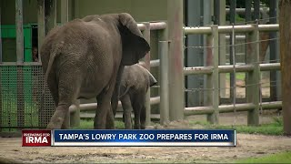 Final Hurricane preparations underway at Tampas Lowry Park Zoo