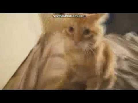Брайан мапс кот пытается убить