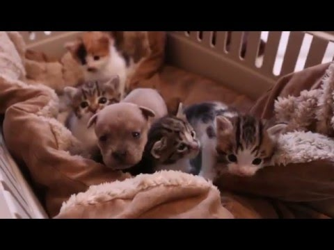 Newborn Puppy and his Cat Family