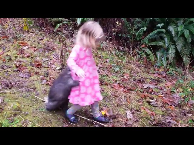 Pet Porcupine Holds onto Little Girl While Walking – 1016251
