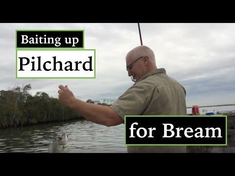 Bream & Flathead, Pilchard Bait.