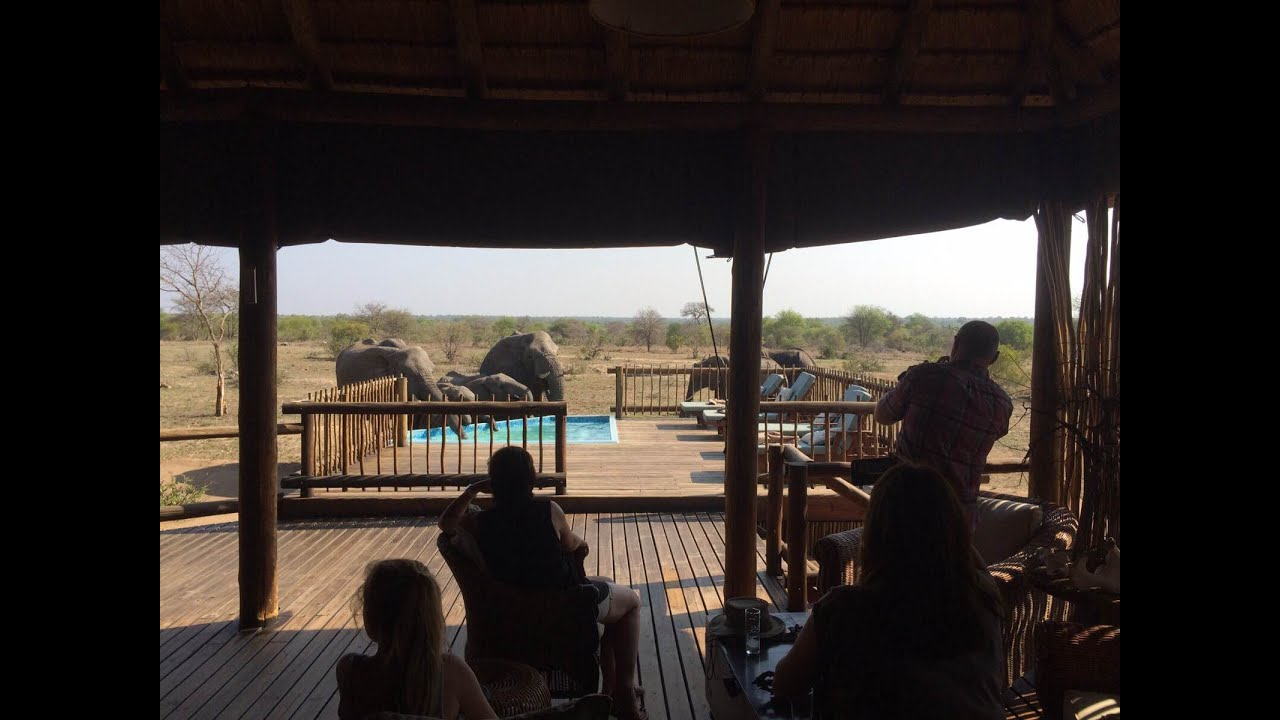 Elephants Drink From Nthambo Swimming Pool Youtube
