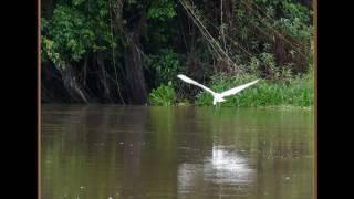 Venezuela 2 - Orinoco Delta and Warao