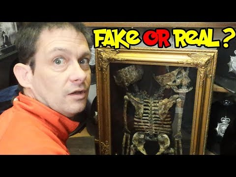 Can This Two Headed Skeleton Be Real?
