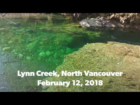 Vancouver Vacation: Lynn Creek