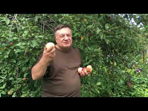 Яблочный мир