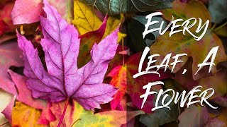 """""""Every Leaf, a Flower"""" 
