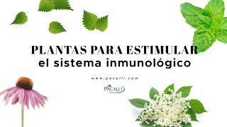 Plantas Para Fortalecer El Sistema Inmunológico Youtube