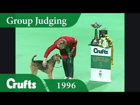 Airedale Terrier wins Terrier Group Judging at Crufts 1996