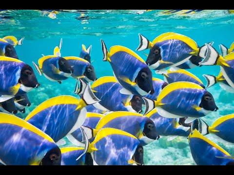 Dubai Aquarium and underwater zoo Part 2