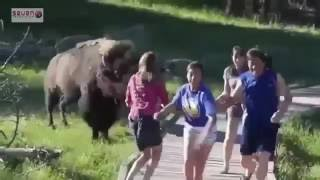 Khi động vật troll chổ hiểm du khách