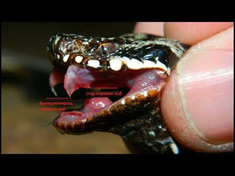 Топ 4 Най-Опасните Животни в България!!!