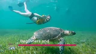 Snorkeling tour with Sea Turtles & Statues