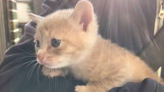 我が家にやって来た子猫が4年でこんなに大きくなりました