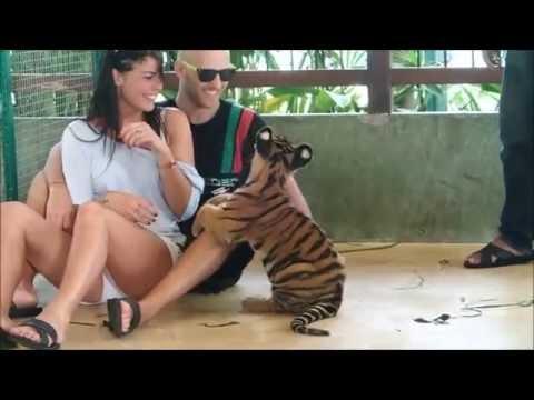 Tiger Kingdom - Shocking!