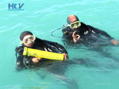 Artifial Reef Mirya