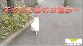 天王寺動物園で人気沸騰中のまさひろ君の半日 夕方編 ゾウ舎から鳥の楽...