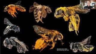 BMAP 2021 Webinar: Fascinating Pollinators