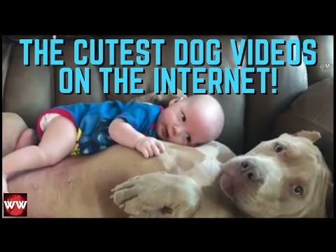 The 10 Cutest Dog Videos On The Internet!