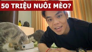 50 triệu nuôi mèo liệu có đủ? | Oops Banana Vlog 134