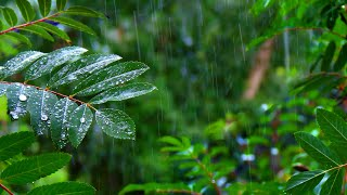 Rainforest Rain Sounds for Sleeping or Studying 🌧️ White Noise Rainstorm 10 Hours