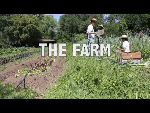 LOCAL: The Life of an Urban Farm
