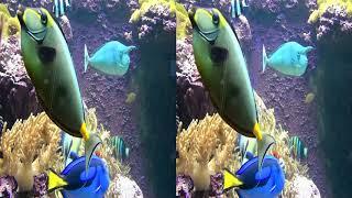3D video - Zoo Stuttgart Aquarium 2/3 - (3D SBS VR Box)