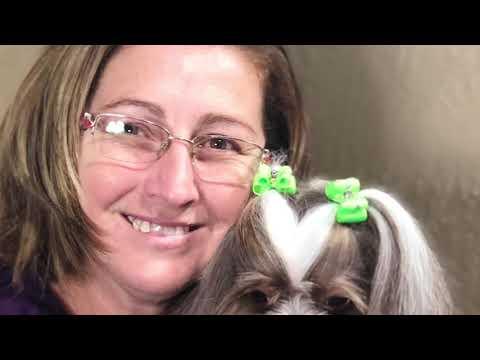 Shih Tzu Dog breed Dog Grooming Video