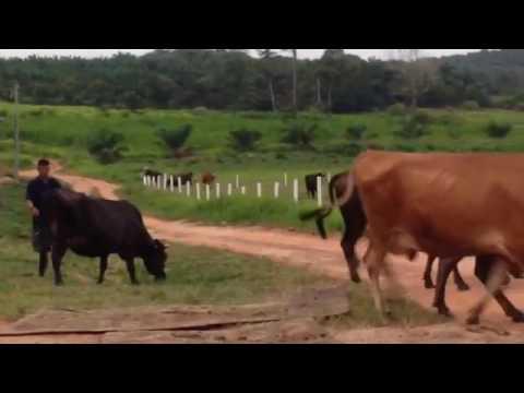 NS Dairy Farm