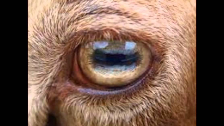Sheep Eye Dissection Lab Sheet Quizlet | Jidimakeup.com