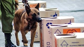 CBPrime: CBP Trains K-9s to Detect Illegal Ivory in Tanzania