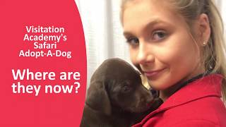 Auction Puppies: Where are they now?