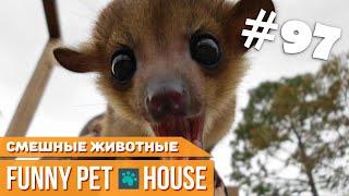 СМЕШНЫЕ ЖИВОТНЫЕ И ПИТОМЦЫ #97 АВГУСТ 2019 | Funny Pet House