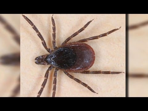Tick season health warning