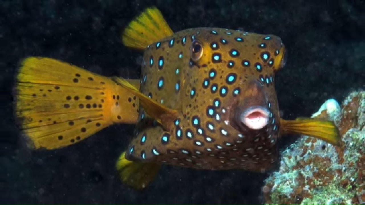 Weirdest Looking Fish - YouTube