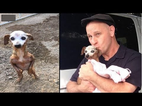 Puppy Was Dumped In The Middle Of A Busy Freeway, Then A Driver Stopped And Realized The Truth!