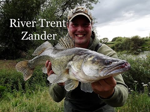 River Trent Zander