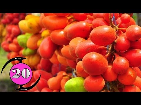 20 ผลไม้พื้นบ้านของไทย / 20 Thai Folk Fruits