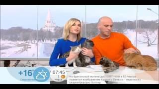 Видео с первого канала, день кошек