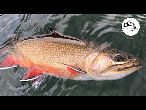 A Surprising STILLWATER FLY LINE Wrecked The Brookies...