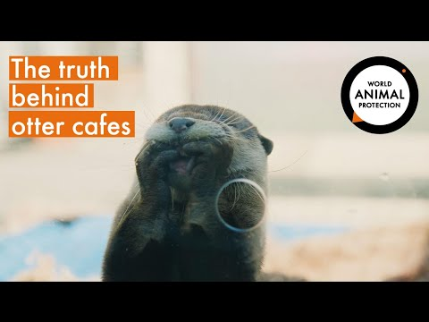 Pet Otters: The Truth Behind The Latest Wildlife Craze