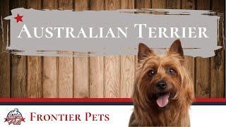 Australian Terrier Breed Facts