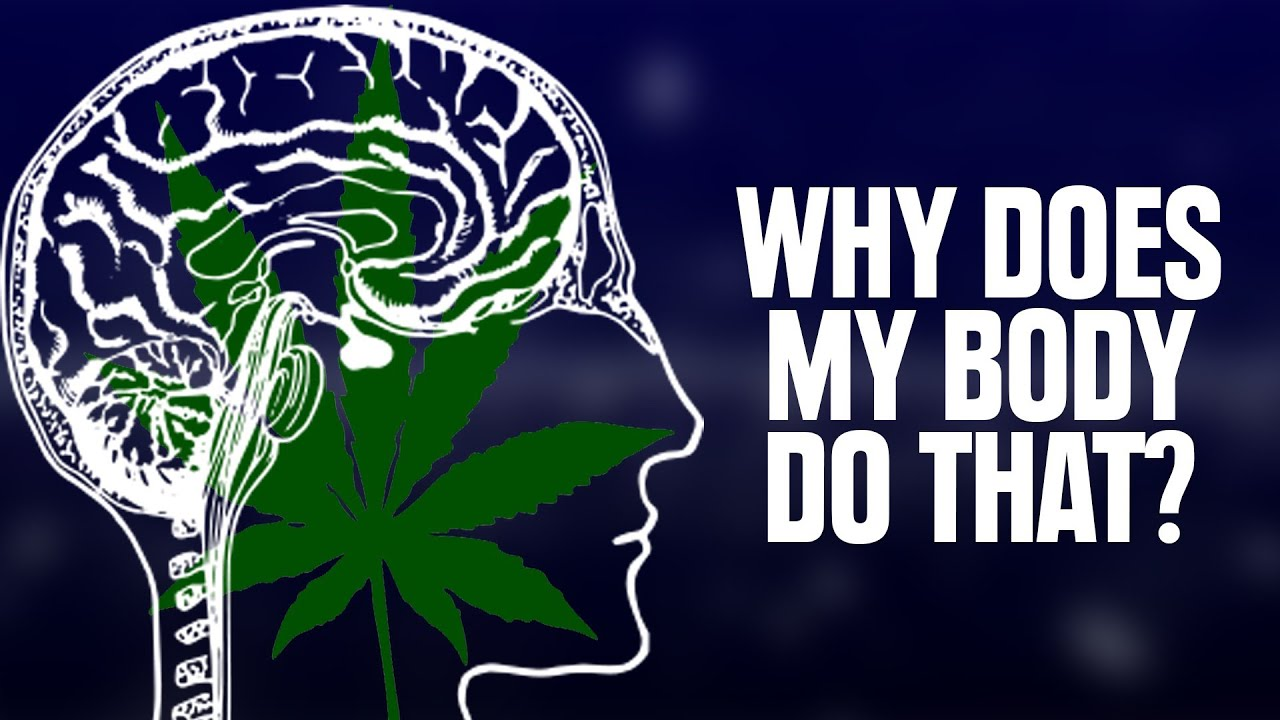Marijuana Animated Wallpaper Why Does My Body Do That On Weed Youtube