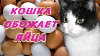 Кошка ест яйца и плямкает. Cat loves eggs