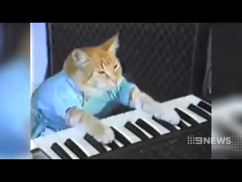Festival of Cats | 9 News Perth
